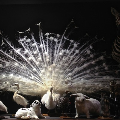 Paris-Design-Week-Taxidermy-AD-2013